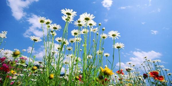 Tuintips voorjaar